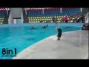Дельфин играет в мяч с маленьким мальчиком  Dolphin playing with kid!