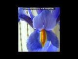Цветики под музыку Kenio Fuke - Garden . Picrolla