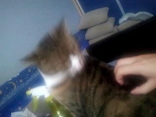 Заставляем кота лизать :з