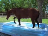 The Most Amazing Thing Happened When Our Horse Discovered A Kiddie Pool