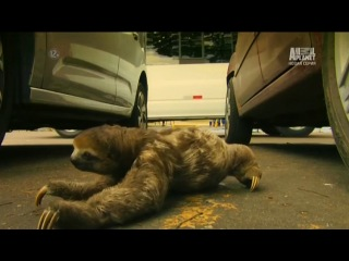 Неизведанные города. Манаус 1 (2014) Animal Planet