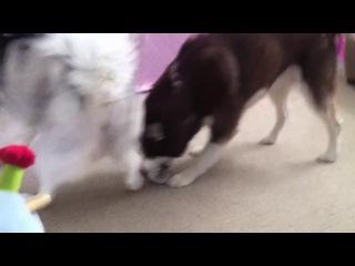 "Dogs like socks by psychostick [official] ""i'm a dog and i like socks"""