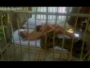 Лесбийский секс Марики Грин ( Marika Green) и Сильвии Кристель ( Sylvia Kristel) в постельной сцене в фильме Эммануэль ( Emmanuelle, 1974, Жюст Жэкин)