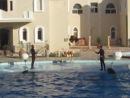 Египет 2014, Дельфинарий