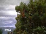 2010-Природа Камчатки.(Дата-2010г.Источник-RTG)