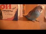 Мой попугай подпевает Rammstain