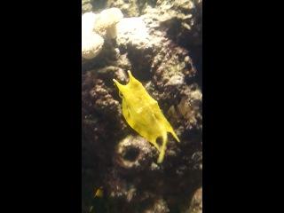 Просто смешная рыба