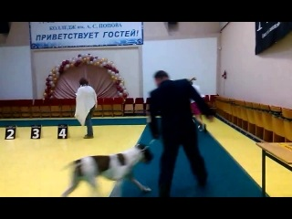 Радиотехникум 30 11 2014 Олично 1 ЮСАС ЛЮ