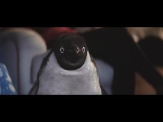 Очаровательная история о дружбе мальчика и пингвина
