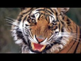 Top 5 Most Terrifying Animal Sounds смотреть до конца!