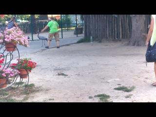 Самое забавное видео из ЭКОпарка! Птицы вышли из вольера и потопали дальше)))