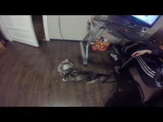 Моё первое видео с GoProHero, мой первый в жизни кот, мой 22 Новый год!С наступающим, братва!