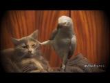 Цитаты великих попугаев