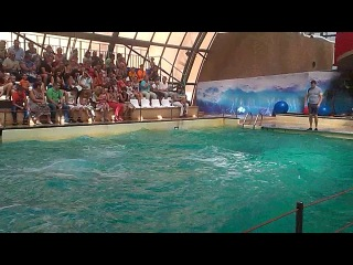 Ростовский дельфинарий