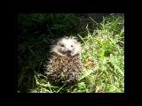 Ёёёжик =)) милейший малыш - такие щечки, ушки, носик, лапки =))