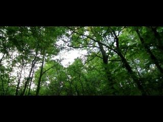 Показать красоту леса мало. Её надо почувствовать