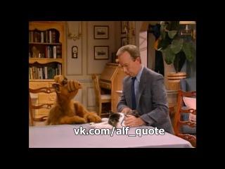 Alf Quote_Season 1, Episode 3 - Твои веки становятся тяжелыми..