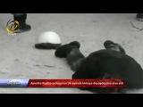 Amerika Rusiya ordusunun Ukraynada birbaşa döyüşdüyünü elan etdi
