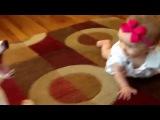 Собака по кличке Бадди учит малышку ползать по полу