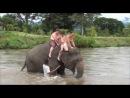 По улицам слона водили