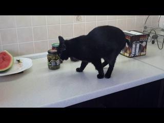 Кошка Кошка, после употребления валерьянки