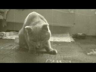 Зомби кот
