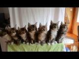Wiggle - котят