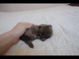 Няшный котенок!!