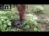 Лошадь смотрит, как черепахи занимаются сексом, и получает за любопытство / Nosy Horse Gets In The Way Of Tutles Having Sex
