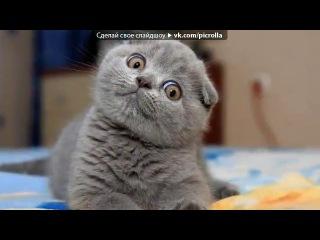 «Котята» под музыку Шакира - Ла-ла-ла. Picrolla - Я сделала это слайдшоу в [[169050857]]