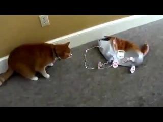 ХОДЯЧИЕ воздушные шары (живой кот и фольгированный)