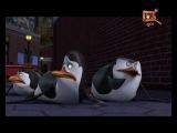 QTV = // Анонс // = Пингвины Мадагаскара