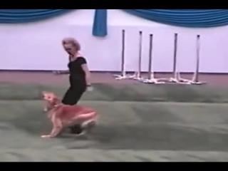 Dog and owner perform a cute grease dance routine.