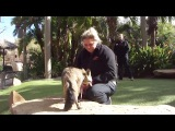 Большеухая лисица в Сафари-парке зоопарка Сан-Диего (The San Diego Zoo Safari Park)