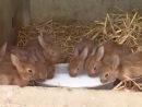 Les animaux de la ferme _ le lapin