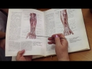 14. Артерии и вены верхней конечности - д.м.н., проф. Романюк С.Н.