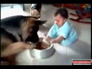 Смешные видео с собаками и детьми Best Funny Dogs & Kids