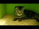 Игровой комплекс для кота своими руками. (Making a home for the cat) Часть 1