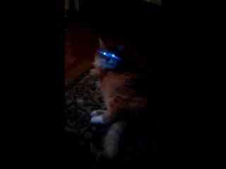 кот из сверхъествественного