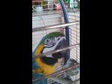 говорящий попугай Гоша))))