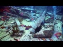 The best dive sites at Sharm El Sheikh, Egypt in HD - YouTube