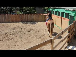 Езда на лошадях. Первый урок Яна