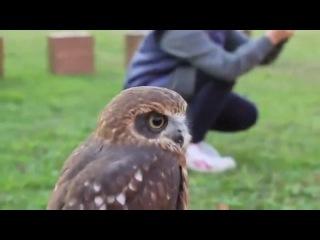 Lovely Owl hiboux Happeulle гладит сову совенок