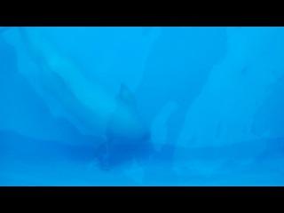 Дельфинарий АКВА-МИР (п. Небуг)