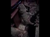мой кот дурак:D