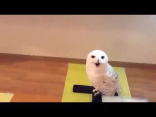 Как смеется сова | WWW.KACHI.RU