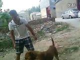 Собачьи бои немецкий дог (щенок)  vs питбуль (метис) 2