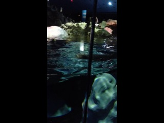 Лоро парк -пингвины
