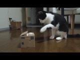 Кот и игрушка + мнение эксперта (6 sec)