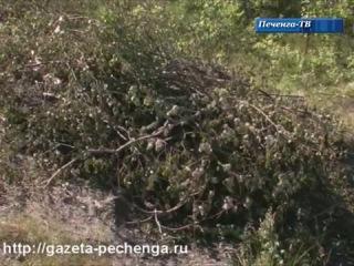 Интервью с главой администрации Сергеем Гончаром по поводу вырубки деревьев на автодороге Никель-Сальмиярви.